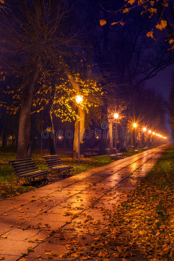 Alley in the park in the night covered in leaves. Alley in Carol park in the night covered in leaves in the autumn stock photo