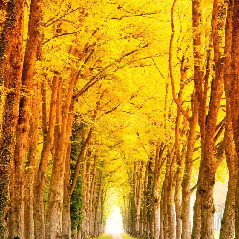 Download Alley In The Park Stock Photo - Image: 43536064
