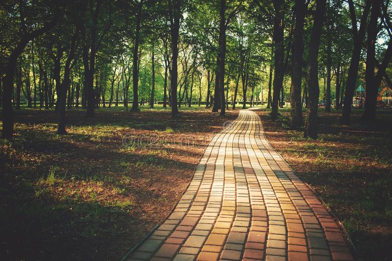 Alley, pathway in the city park in sunlight. Cobbled alley in the public  park. Green tree foliage. Nature outdoor landscape with royalty free stock image