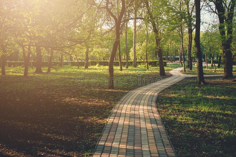 Alley, pathway in the city park in sunlight. Cobbled alley in the public  park. Green tree foliage. Nature outdoor landscape with. Road, way, trees. Footpath in royalty free stock photos
