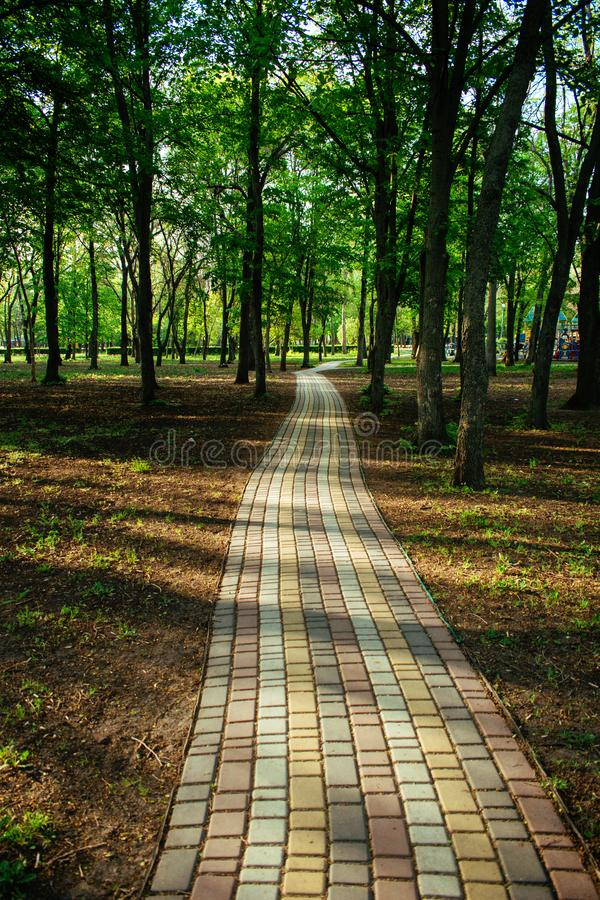 Alley, pathway in the city park in sunlight. Cobbled alley in the public  park. Green tree foliage. Nature outdoor vertical royalty free stock photography