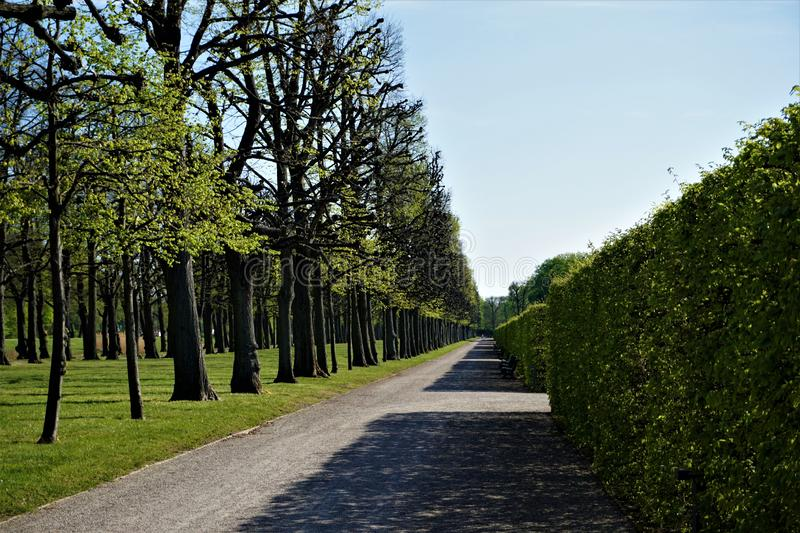 Alley, pathway and hedge in the Great Garden of Herrenhausen Gardens Hanover stock photo