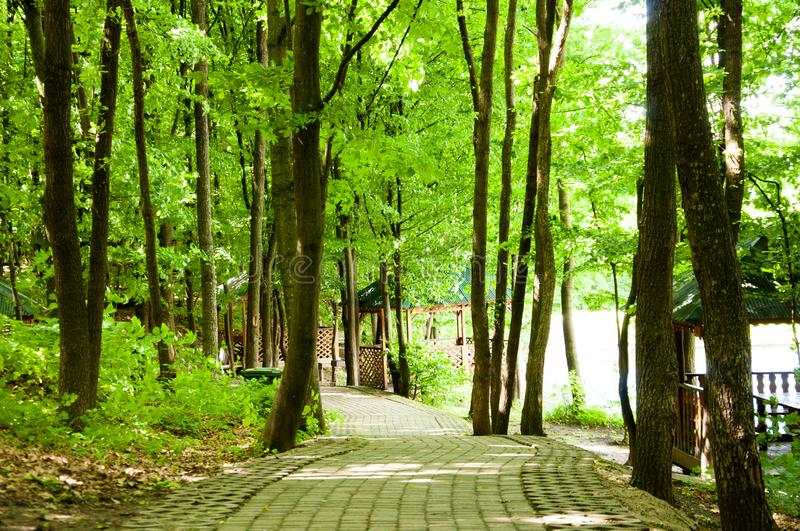 The alley is paved with paving slabs in the midst of tall green trees. In the summer in the park stock photography