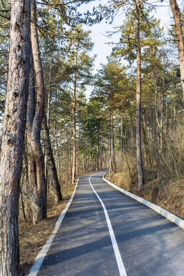 Alley in the pine forest for jogging and cycling stock images