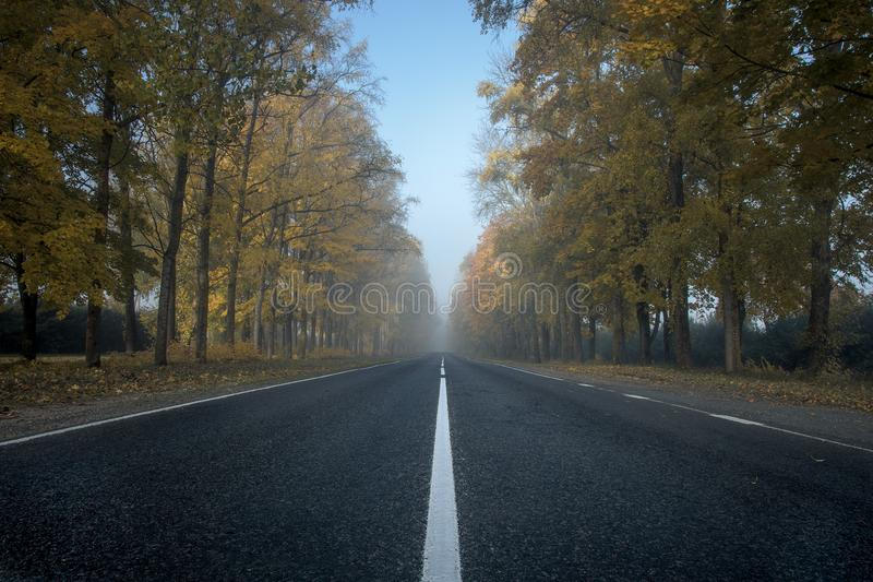 The alley of poplars in the early autumn morning fog royalty free stock image
