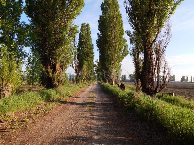 Alley of pyramidal poplars. stock photos