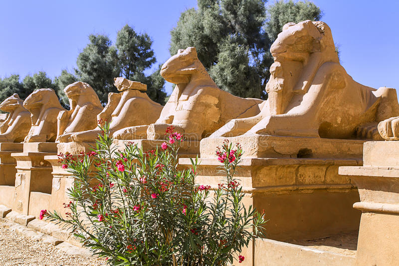 Sphinges. Alley of the ram-headed sphinges in front of Karnak Temple. Location: Luxor, Egypt royalty free stock image