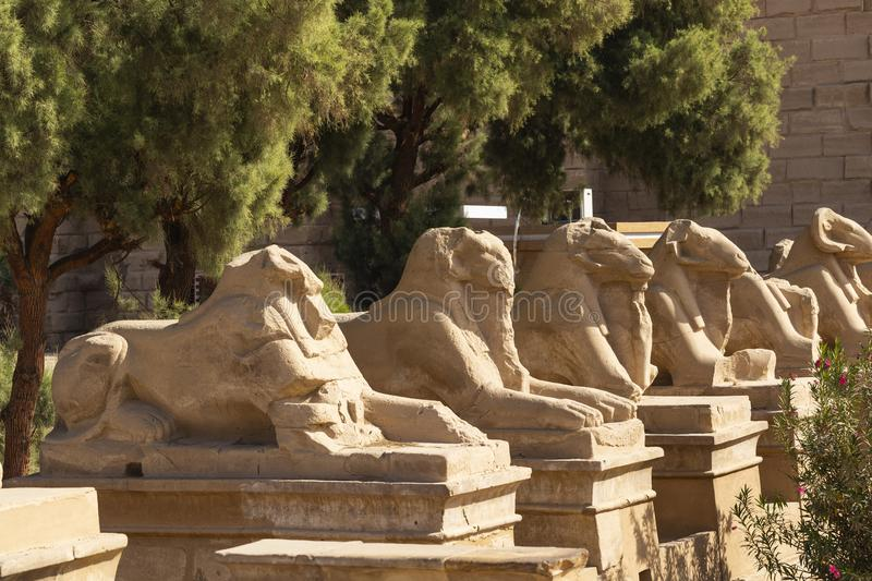 Alley of the ram-headed Sphinxes. Karnak Temple. Luxor, Egypt. Africa, desert royalty free stock photos