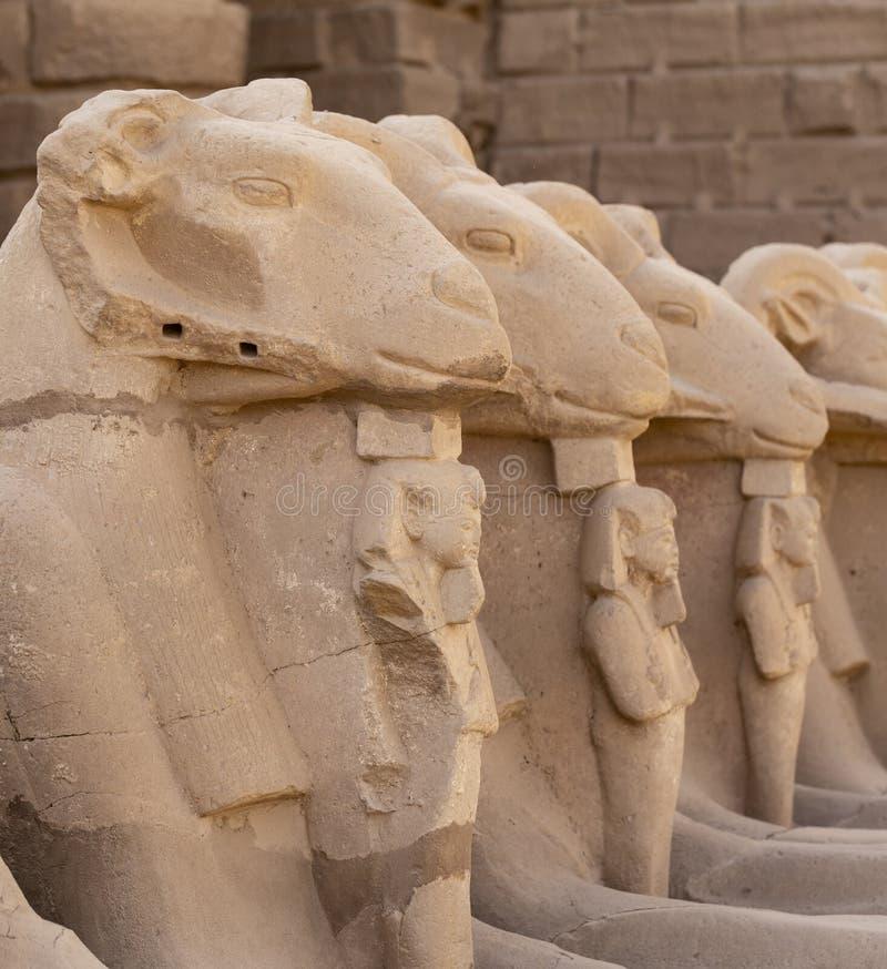 Alley of the ram-headed Sphinxes. Karnak Temple. Luxor, Egypt. Alley of the ram-headed Sphinxes. Karnak Temple, complex of Amun-Re. Luxor, Egypt stock image