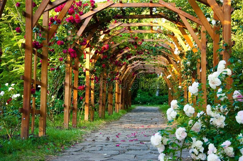 Alley Of Roses Stock Photos
