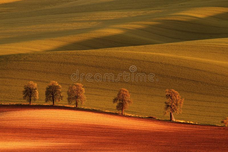 Alley in the setting sun in waves of green fields, all colored in the red color of the evening stock photography
