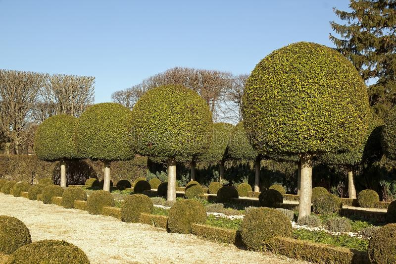 Download Alley shrubs of boxwood stock photo. Image of nature - 23277094
