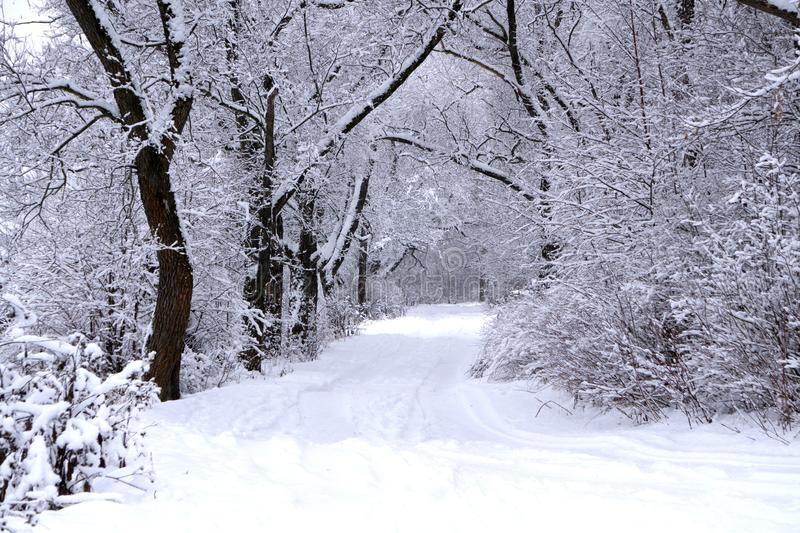 Alley in snowy morning natural nobody rural royalty free stock photography