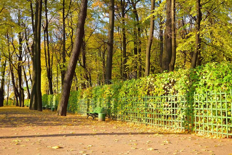 Alley in the Summer Garden with decorative shrub in autumn.  royalty free stock image