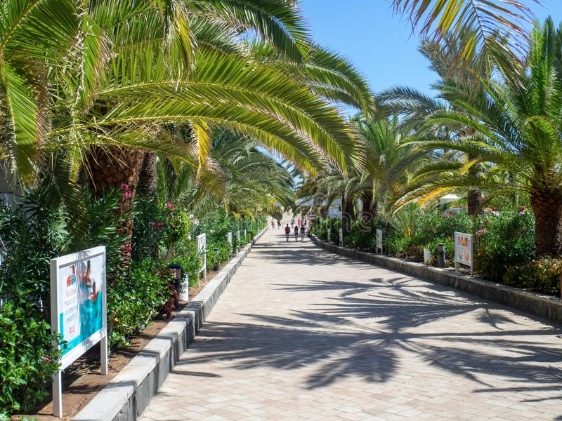 Alley to Maspalomas beach, Gran Canaria island. Gran Canaria/Spain - August 9 2019: Maspalomas  is a tourist town in the south of the island of Gran Canaria stock images