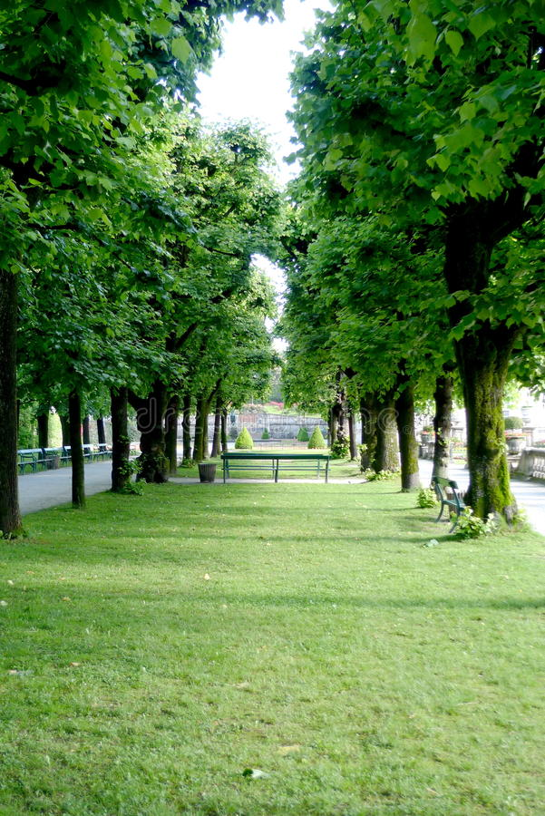Download Alley Of Trees Royalty Free Stock Photos - Image: 10720128
