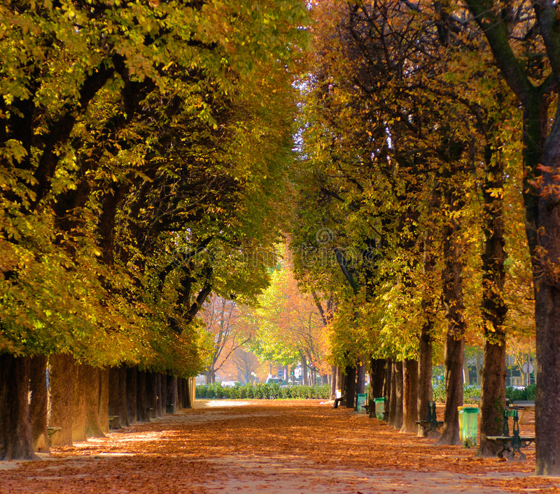 Download Alley of trees in autumn stock image. Image of fall, early - 5606769