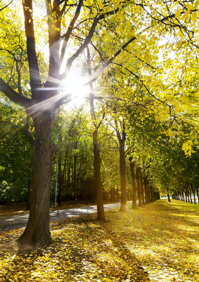 Download Alley Of Trees In Autumn In The City Park Stock Image - Image: 31201727