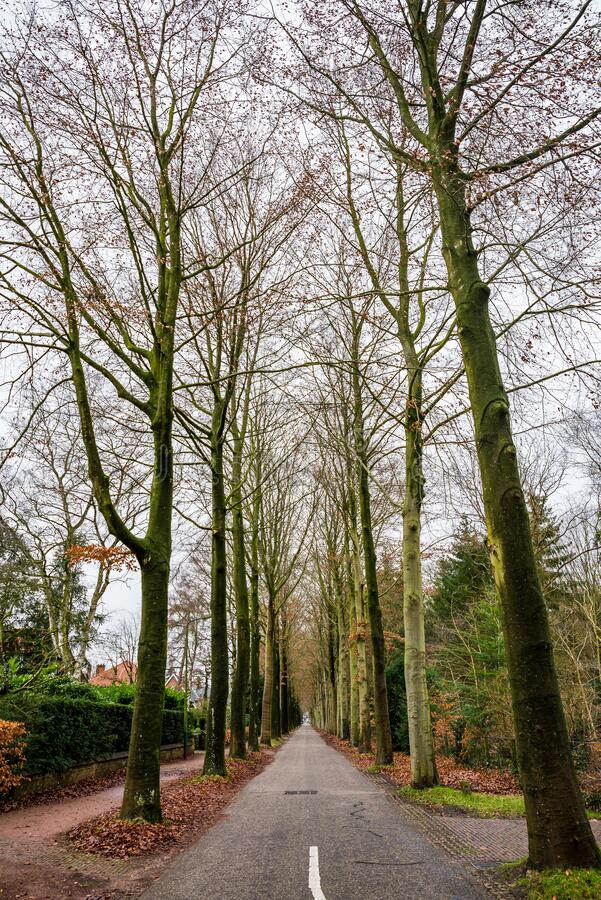 Alley of the trees in Zeist, Netherlands.  royalty free stock photos