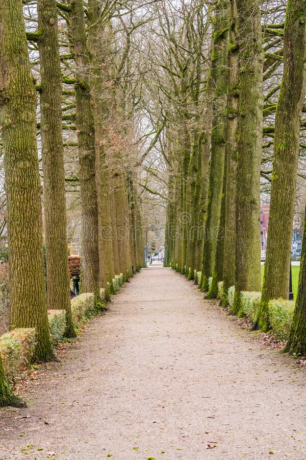 Alley of the trees in Zeist, Netherlands.  stock photo