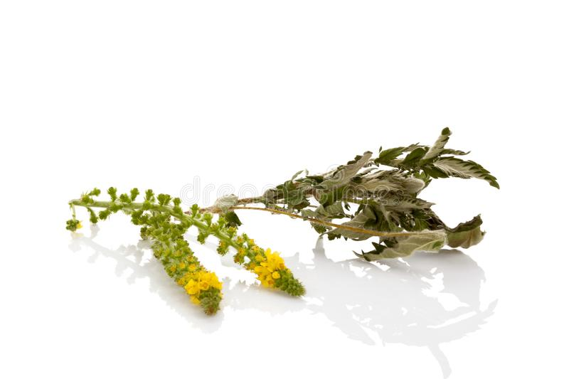 Allgemeine Agrimonyblume mit getrockneten Blättern stockfotos