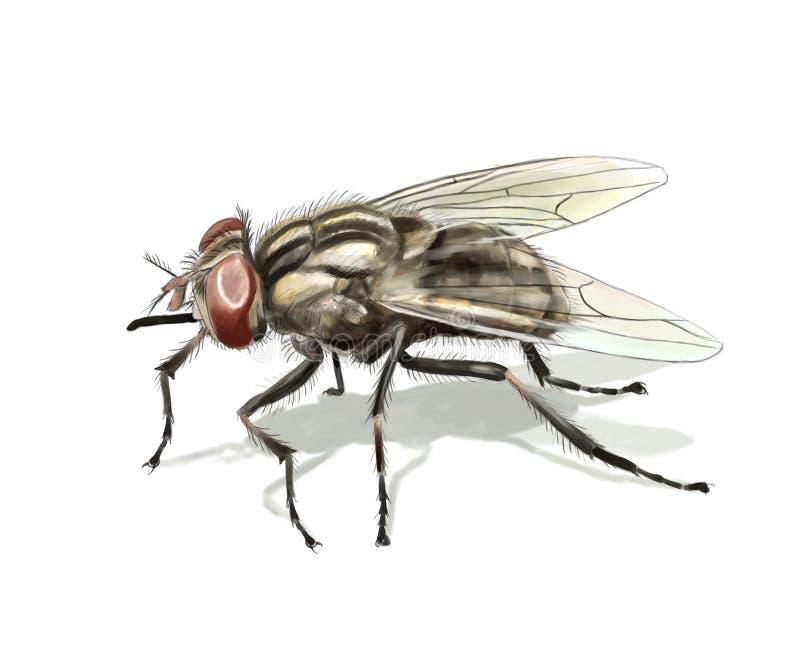 Allgemeine Fliege lizenzfreie abbildung