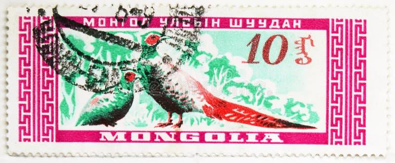 Allgemeiner Fasan (Phasianus colchicus), mongolisches wilde Tiere serie, circa 1959 lizenzfreie stockfotos