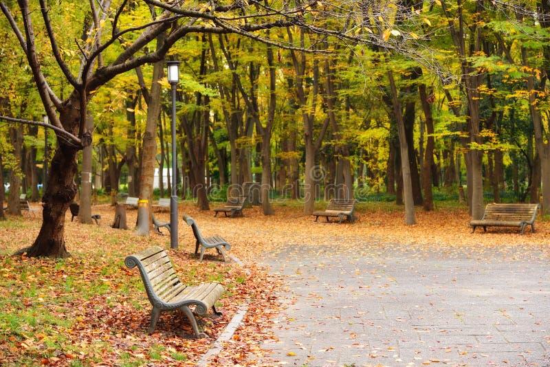 Allgemeiner Park Osakas im Herbst stockfotos