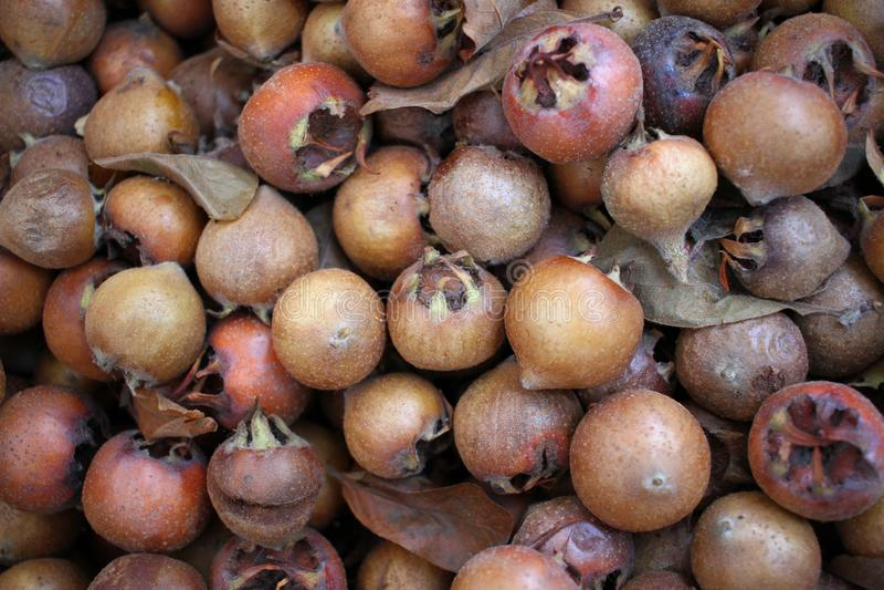 Allgemeines Mispel Mespilus germanica, gesundes biologisches Lebensmittel von der Natur, Mispel neue organische Mispelhintergrund stockfoto