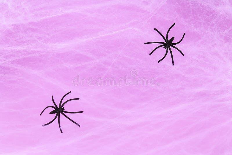 Allhelgonaaftonferiebegrepp. Vit spindelwebb med två svarta spindelwebblila bakgrund royaltyfri bild