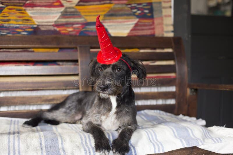Allhelgonaaftonhund royaltyfri foto