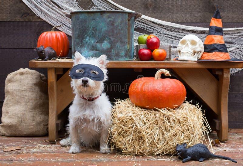 Allhelgonaaftonpartihund royaltyfri bild