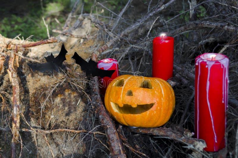Allhelgonaaftonpumpa i skoghäxerit på natten stearinljus och slagträn läskigt stålarhuvud västra amerikansk tradition arkivbilder