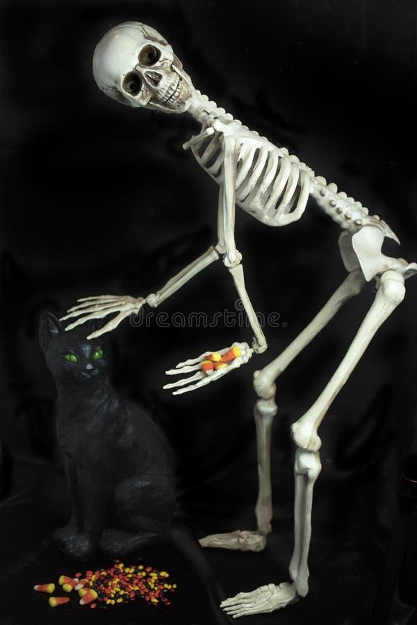 Allhelgonaaftonskelett med en svart katt och att ge ut godisen arkivfoto