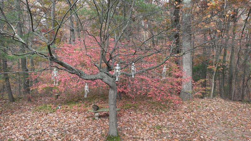 Allhelgonaaftonträd royaltyfri fotografi