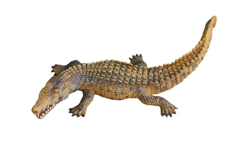 Alligador ou crocodilo em fundo branco isolado imagens de stock