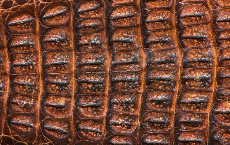 Alligator gevormde achtergrond stock foto