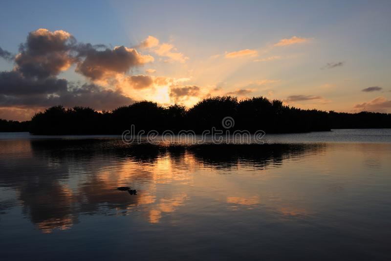Alligator i det Paurotus dammet i Everglades nationalpark, Florida, på solnedgången royaltyfri foto