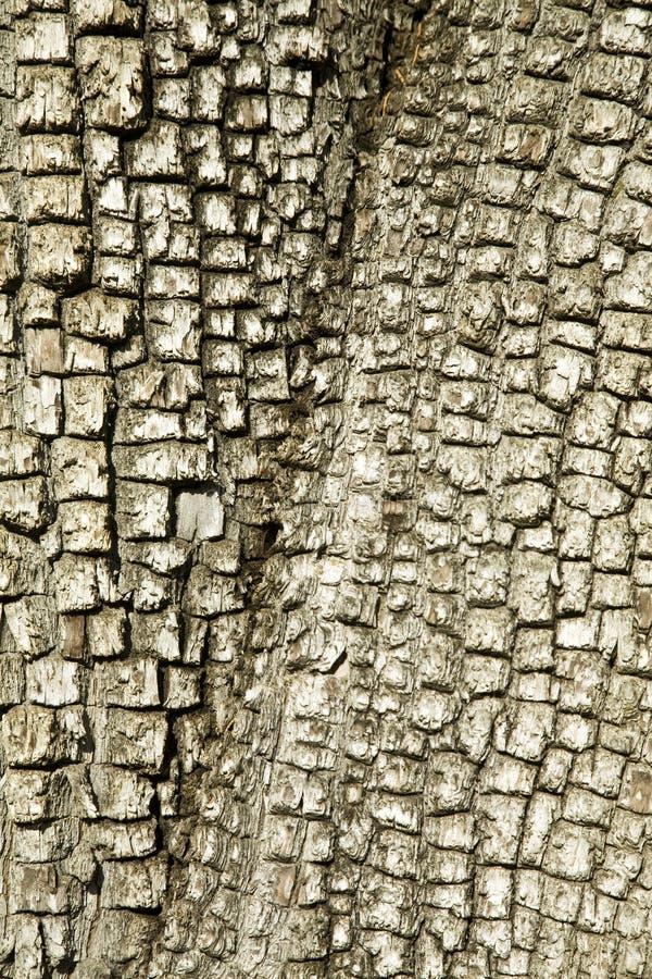 Download Alligator Juniper Treebark Background/Texture Royalty Free Stock Photos - Image: 6966638