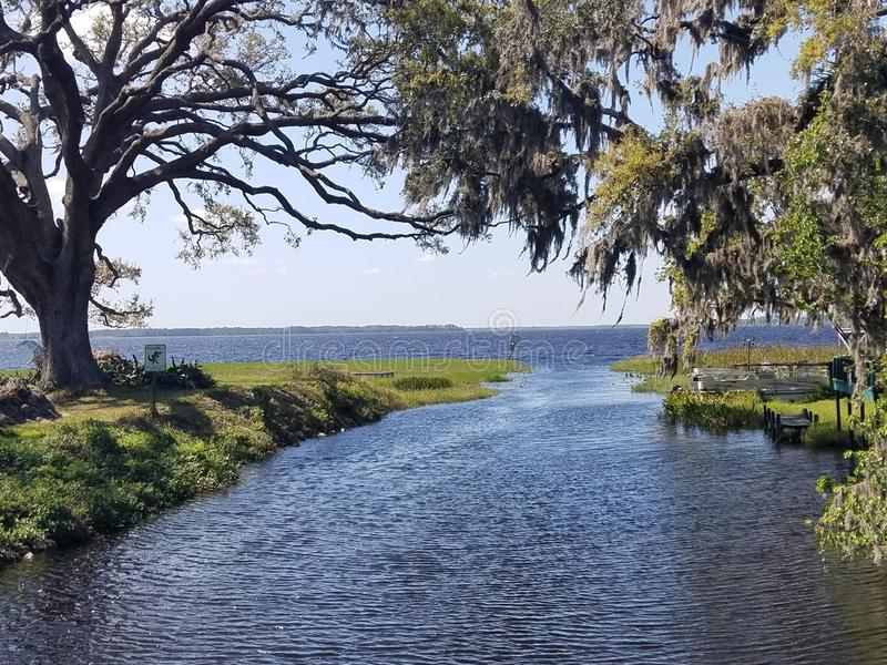 Alligator lake. Inlet framed by a large oak tree royalty free stock photo