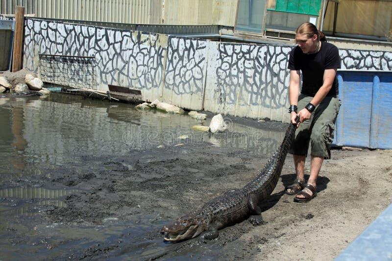 Alligator par l'arrière photographie stock libre de droits