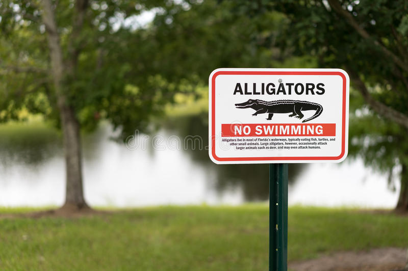 Alligator warning sign in Florida for awareness of imminent dang. Er. Sharp focus to sign for dramatic impact stock photo