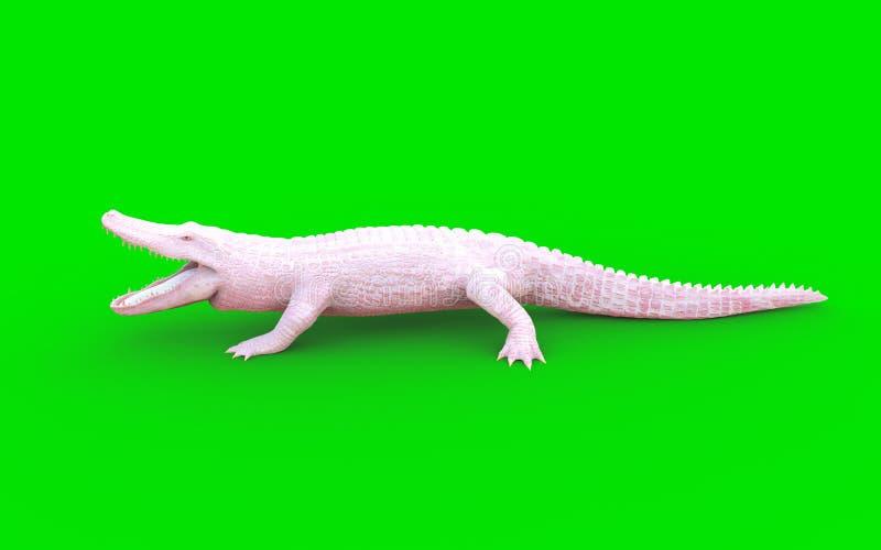 Alligatore di Albino American su fondo verde royalty illustrazione gratis