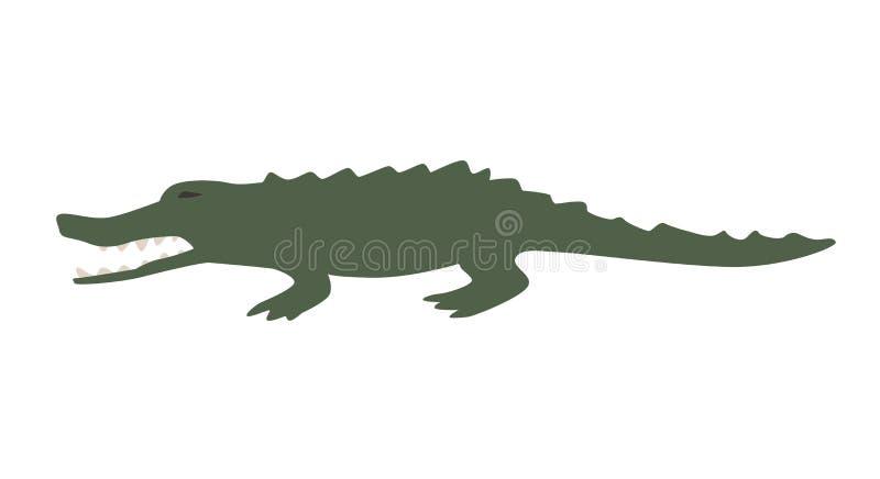 Alligatore verde divertente Illustrazione piana di vettore Isolato su priorità bassa bianca royalty illustrazione gratis
