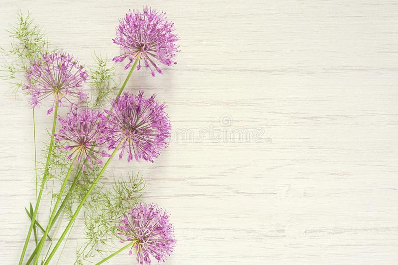 Allium flowers wild onion on white wooden background, beautiful spring bouquet, copy space stock photo
