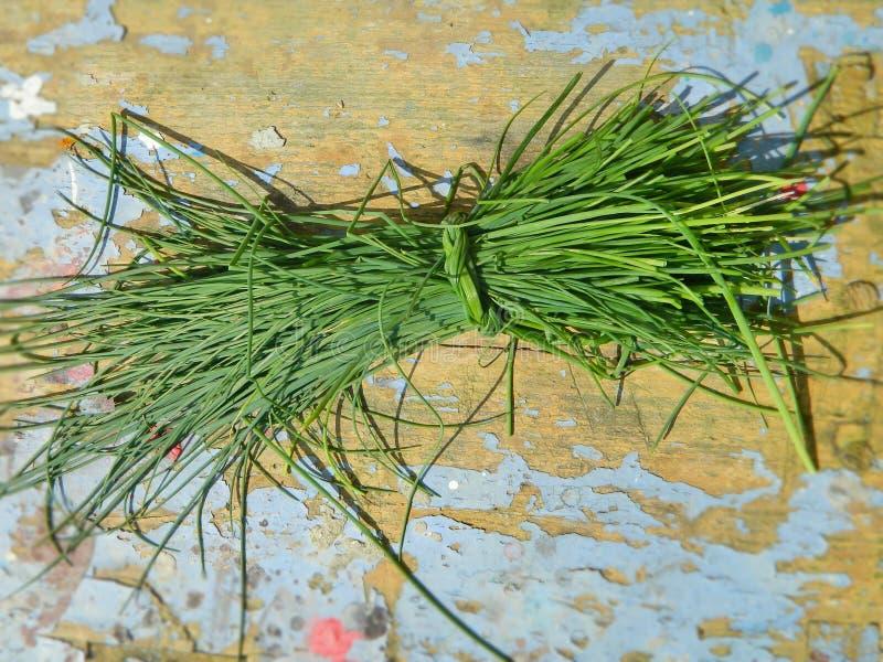 Allium schoenoprasum Chives σχετικά με το ανάγλυφο φόντο στοκ εικόνες