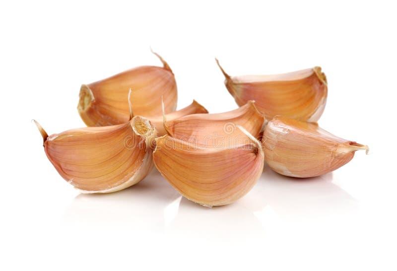 Allium SP stock foto's