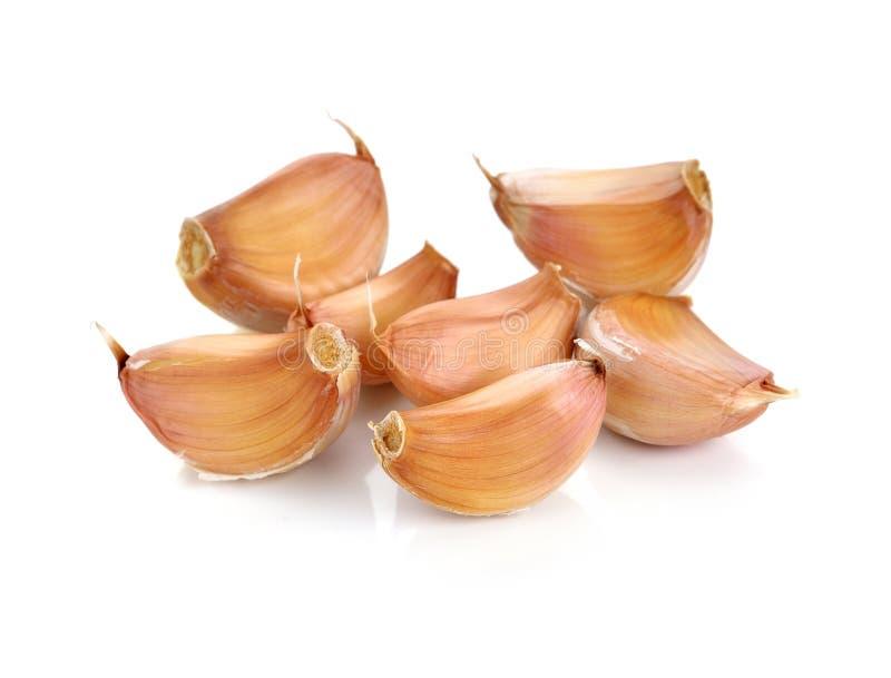 Allium SP royalty-vrije stock foto's