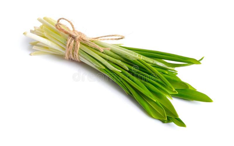 Allium Ursinum, conhecido como o alho selvagem, os ramsons, as entretelas, o alho largo-com folhas, o alho de madeira, o alho por fotografia de stock royalty free