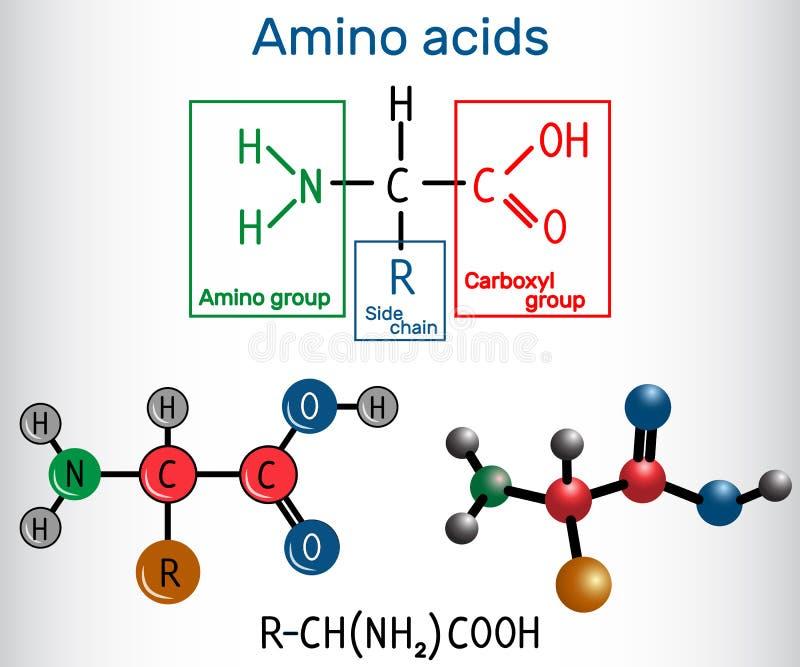 Allmän formel av amino syror, som är byggnadskvarter av pro- royaltyfria bilder